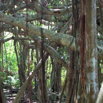 榕情密意品茗遊