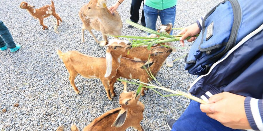 票卷可兌換飼料餵食小動物